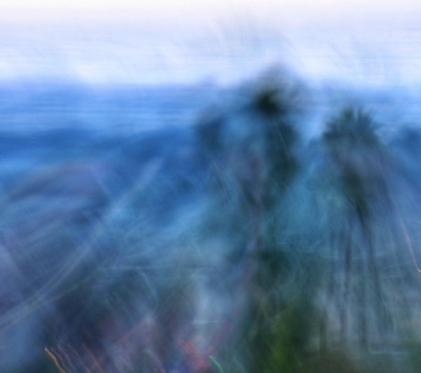 Palm Tradewinds thumbnail