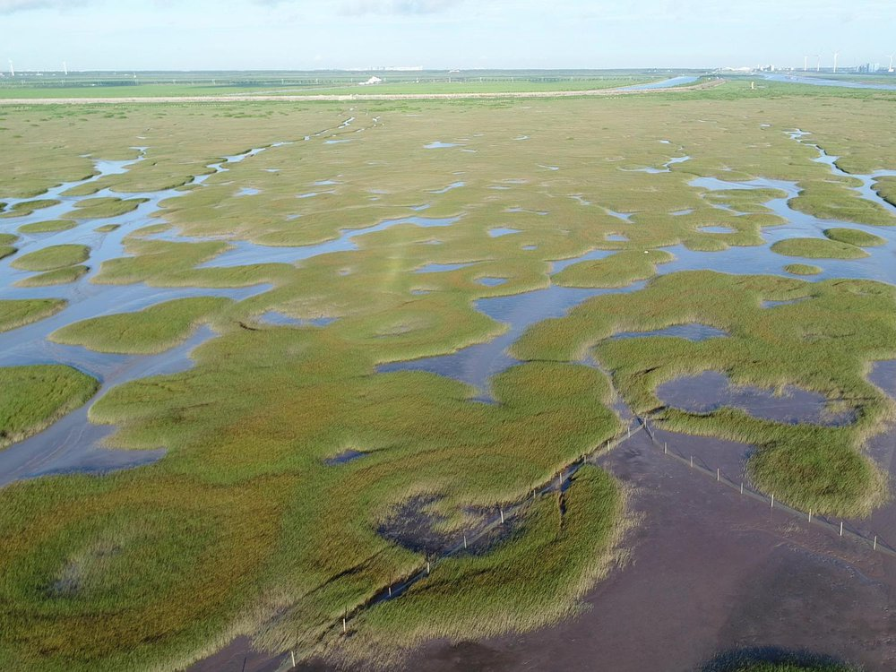 The photo shows a salt marsh ecosystem. The marsh is broken up by green land with small pools of water in the center
