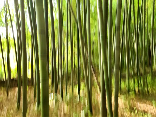 The story of The Soswaewon Bamboo thumbnail