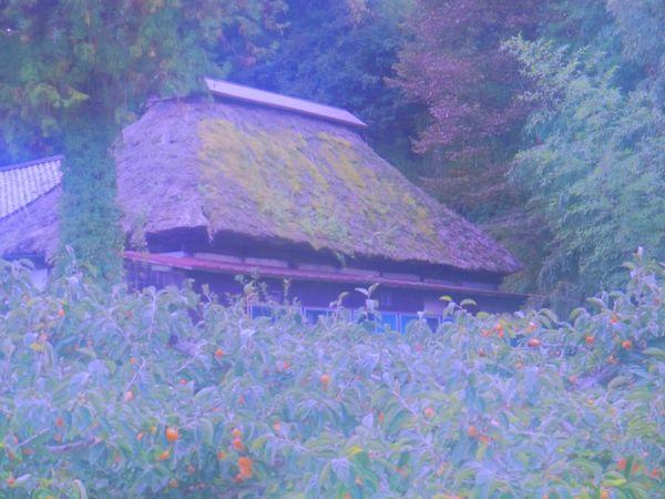 A traditional house in autumn on phantom isle thumbnail
