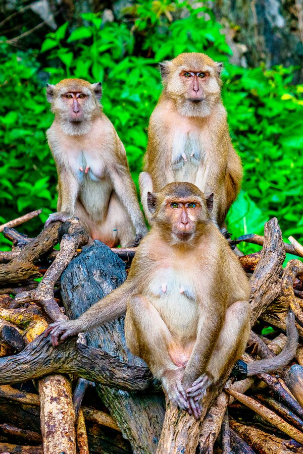 Monkeys thumbnail