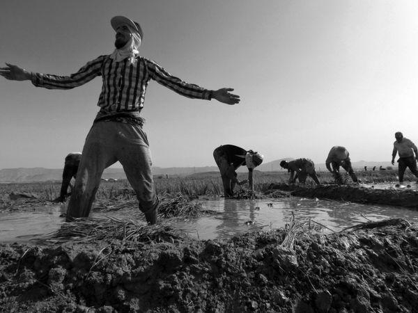 Planting rice thumbnail