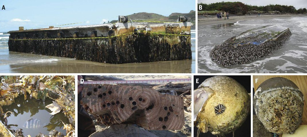 Sea Creatures Still Arriving in the U.S. on Plastic Debris From the Japanese Tsunami Eight Years Ago