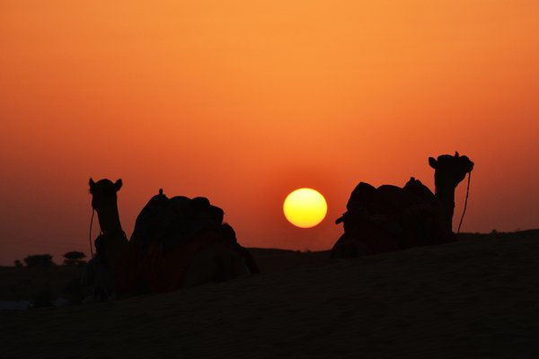 EVENING IN SAM SAND DUNES-RAJASTHAN-3 thumbnail