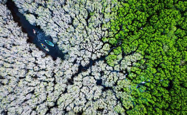 Make a Living in the white-flowered mangrove thumbnail