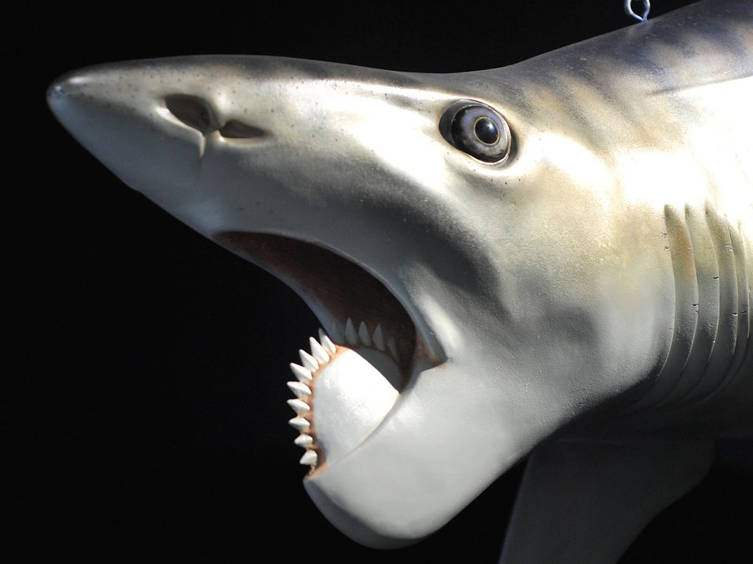These Prehistoric Sharks Had Jaws Shaped Like Circular Saws and Sawtoothed Scissors