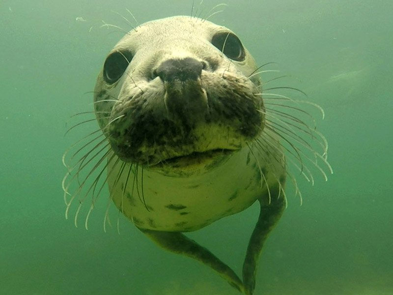 seal-clapping-seal-close-up-two-column.jpg
