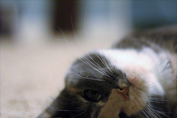 Zinnia the Cat thumbnail
