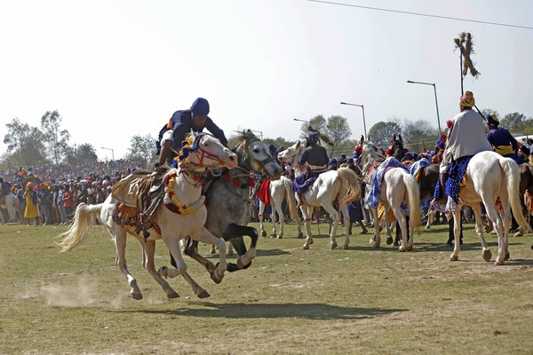 A young boy performing stunts while riding two horses simultaneously during hola mohalla fair thumbnail