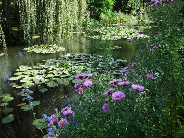 Flowers and lilypad pond thumbnail