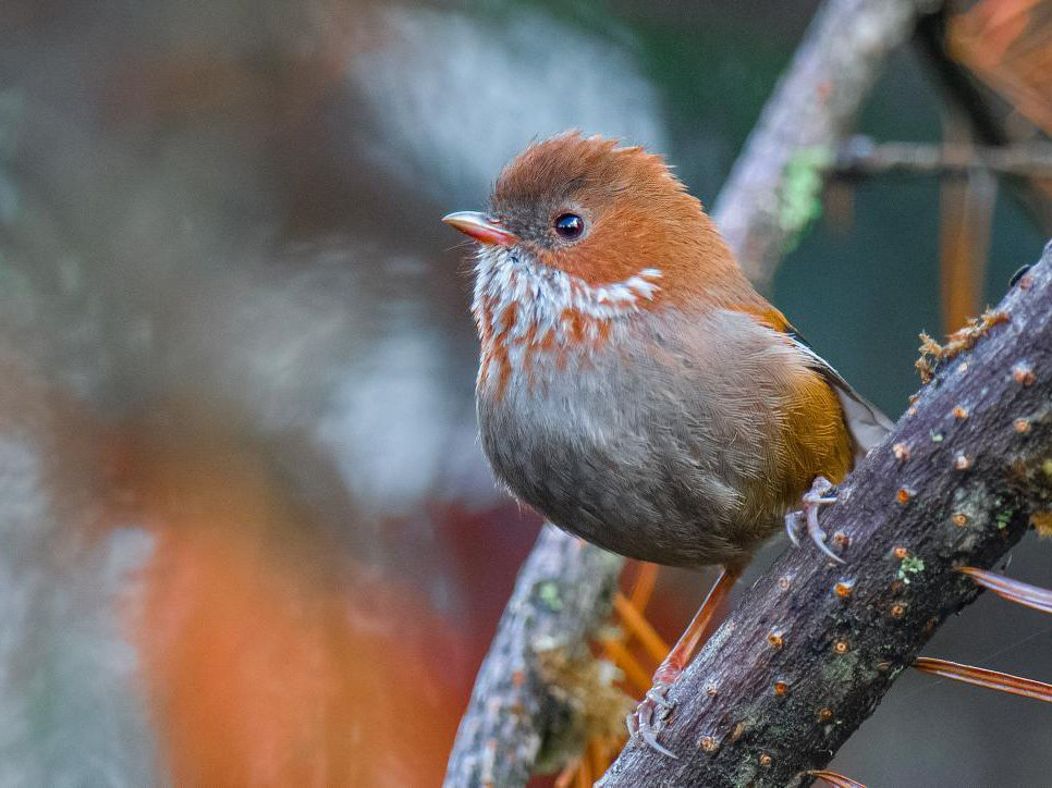 A small brown songbird sits on a branch