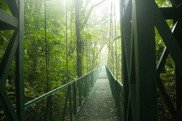 Hanging bridge through cloud forest thumbnail