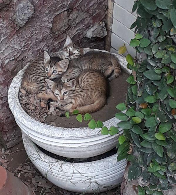 Stray Cats of Lahore, Pakistan thumbnail