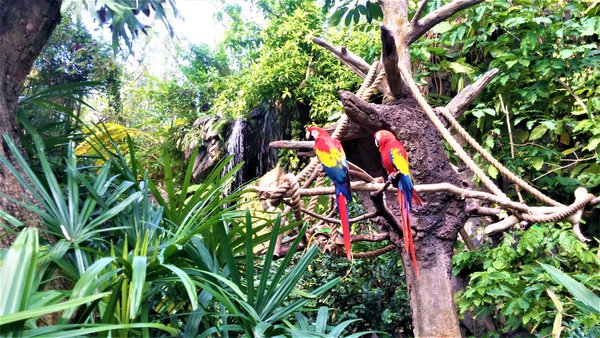 Birds at Disney's Animal Kingdom thumbnail