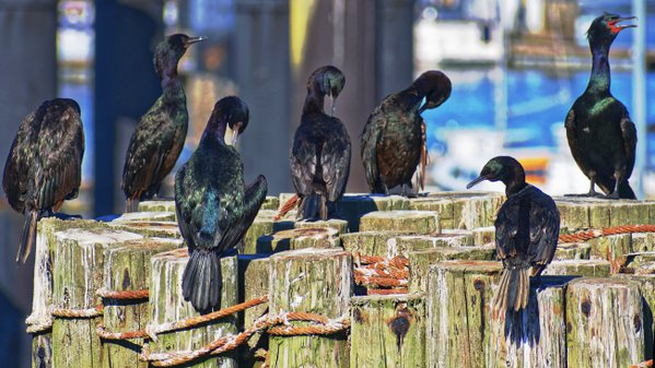 Birds on Pier thumbnail