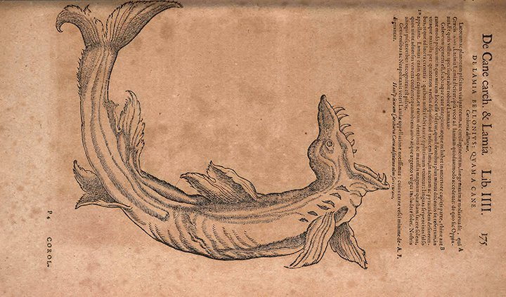 Sharks Were Once Called Sea Dogs, And Other Little-Known Facts
