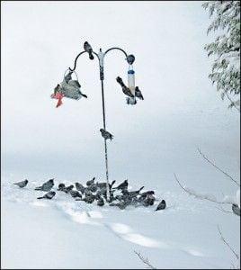 20110520102323bird-feeder-snow-268x300.jpg