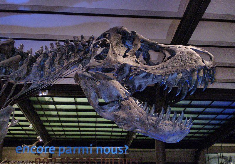 20110520083308stan-tyrannosaurus.jpg