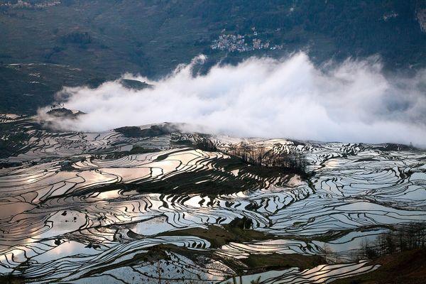 Flooded rice terraces thumbnail