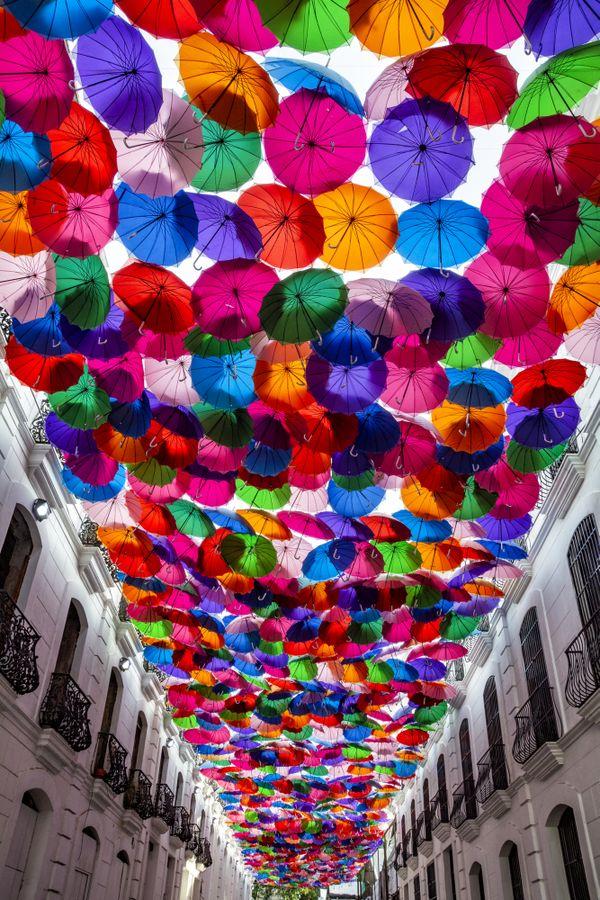 Umbrella Sky thumbnail