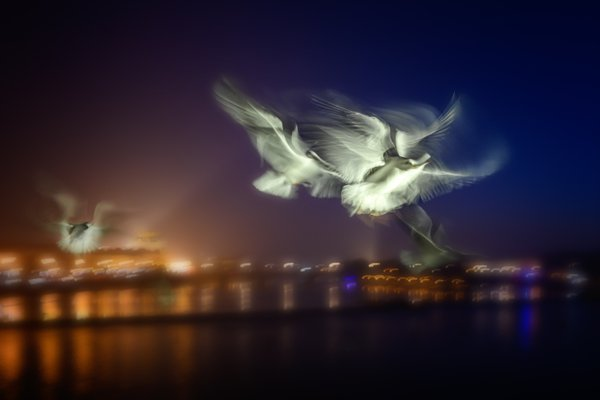 Night Bird thumbnail