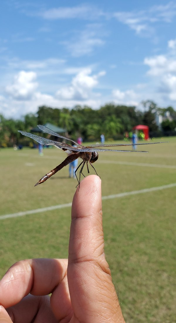 Dragonfly Finger thumbnail