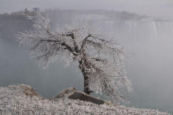 Frozen Wonderland thumbnail