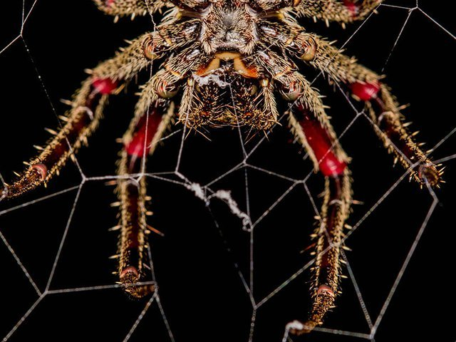 Spider silk is more than just a web for snaring prey.