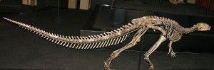 20110520083120dryosaurus-dinosaur-skeleton1-300x99.jpg