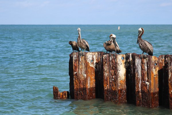 Pelican Row thumbnail