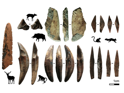 This diagram shows the different kinds of animal bones used to make the 48,000-year-old tools.