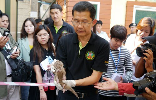 A Thai enforcement officer with one of the shocked, rescued babies.