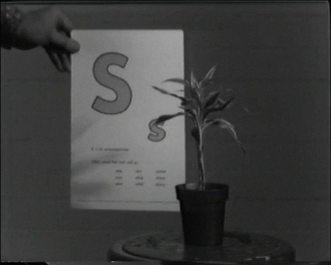 """A photo of a plant with the letter """"S"""" behind it on a piece of paper."""