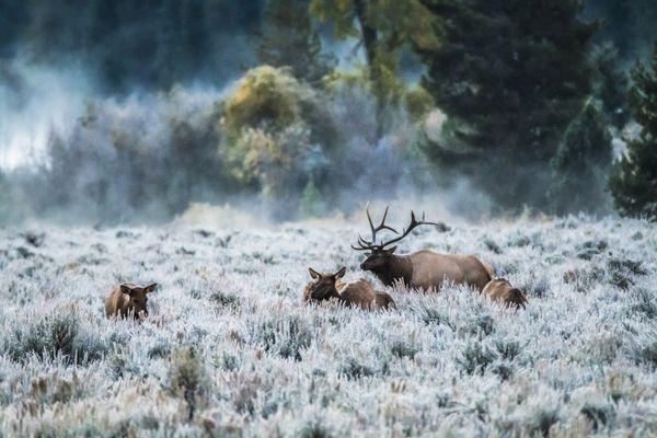 A herd of deer thumbnail