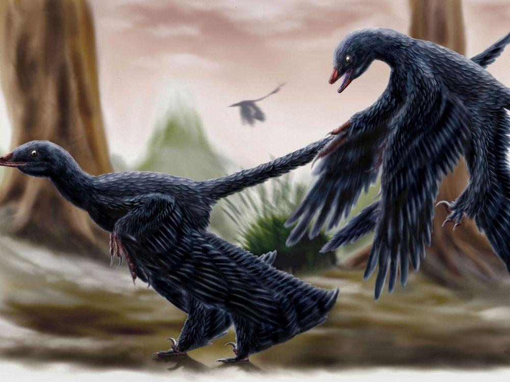 Microraptors