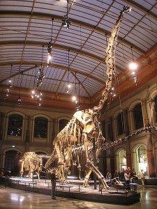 20110520083148Brachiosaurus-German-Museum-225x300.jpg