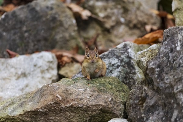 Curious little squirrel thumbnail