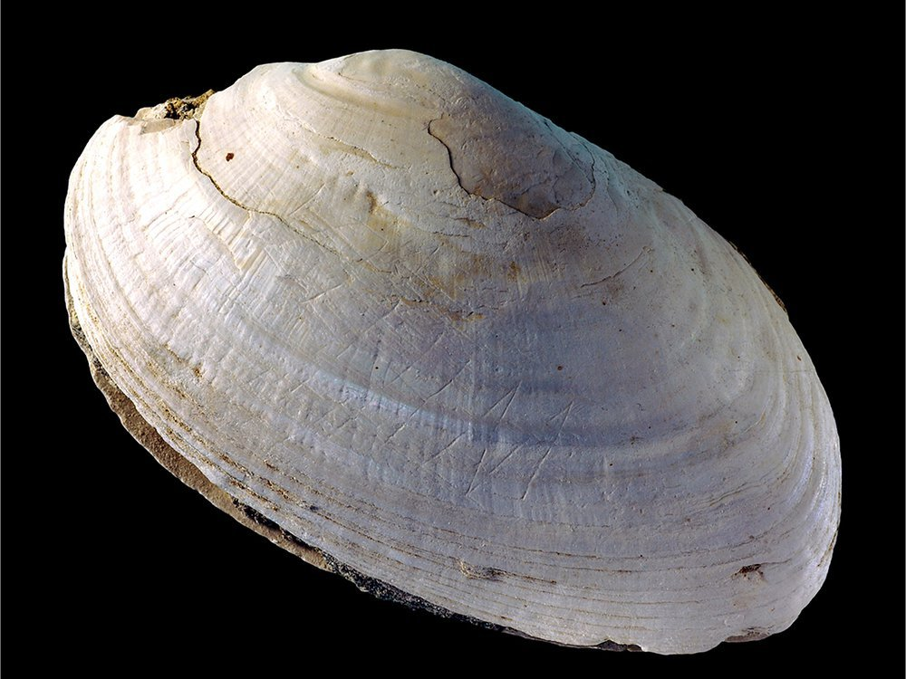 Engraved shell
