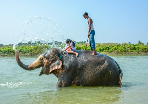 Elephants spray water thumbnail