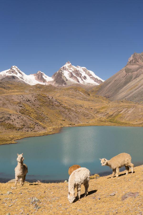 Andean Postcard thumbnail