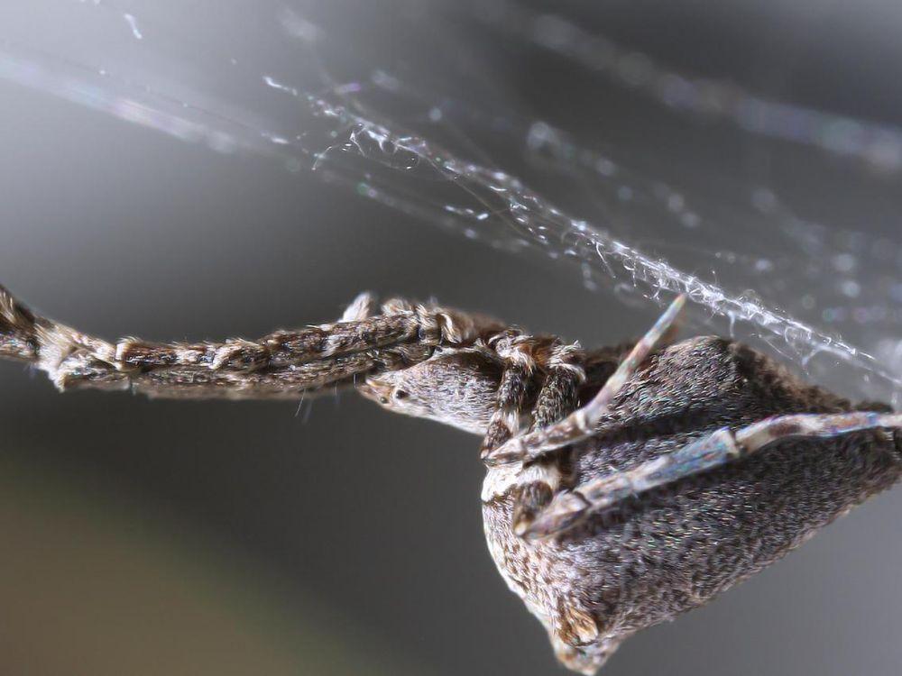garden center spider.jpg