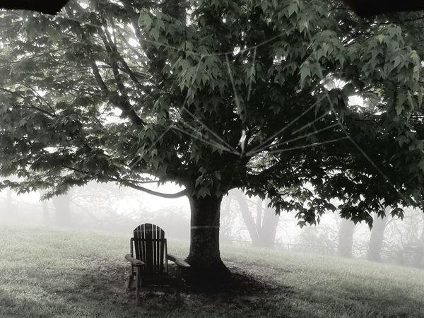 A foggy morning in Virginia thumbnail