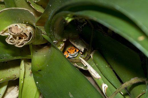 frogleaf.jpg