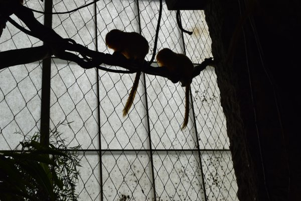 Two Little Monkeys  thumbnail