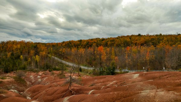 fall colours at play thumbnail
