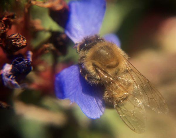 Busy Bee thumbnail