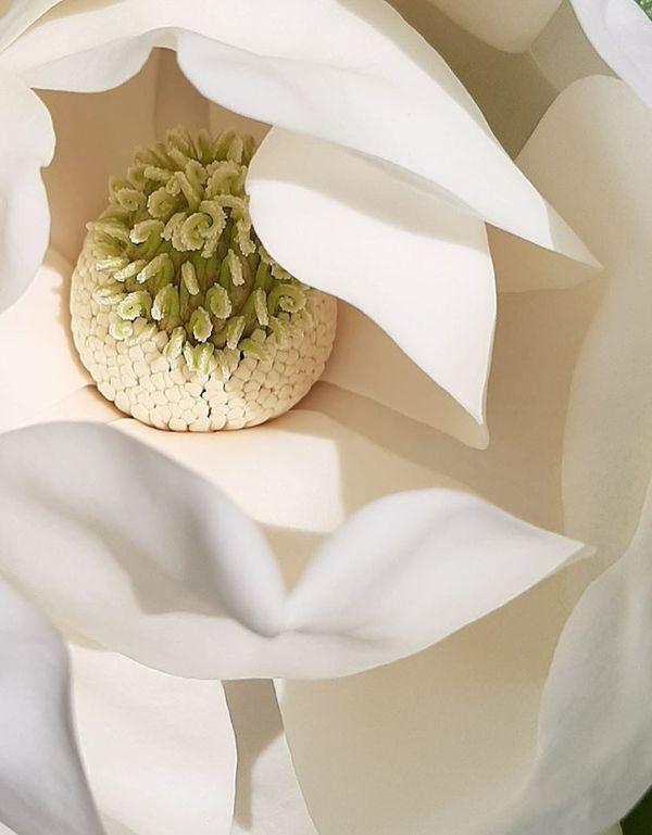 Magnolia Blossom thumbnail