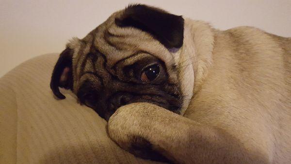 Otis posing thumbnail