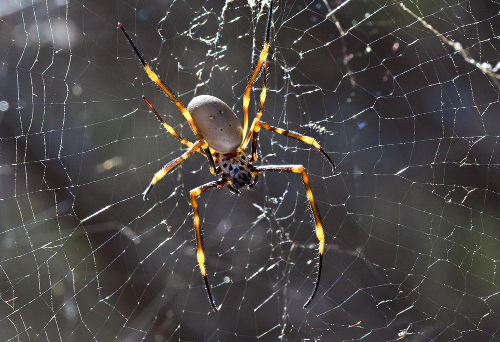 a spider.jpg