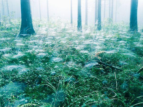 Jesienny las podczas grzybobrania thumbnail
